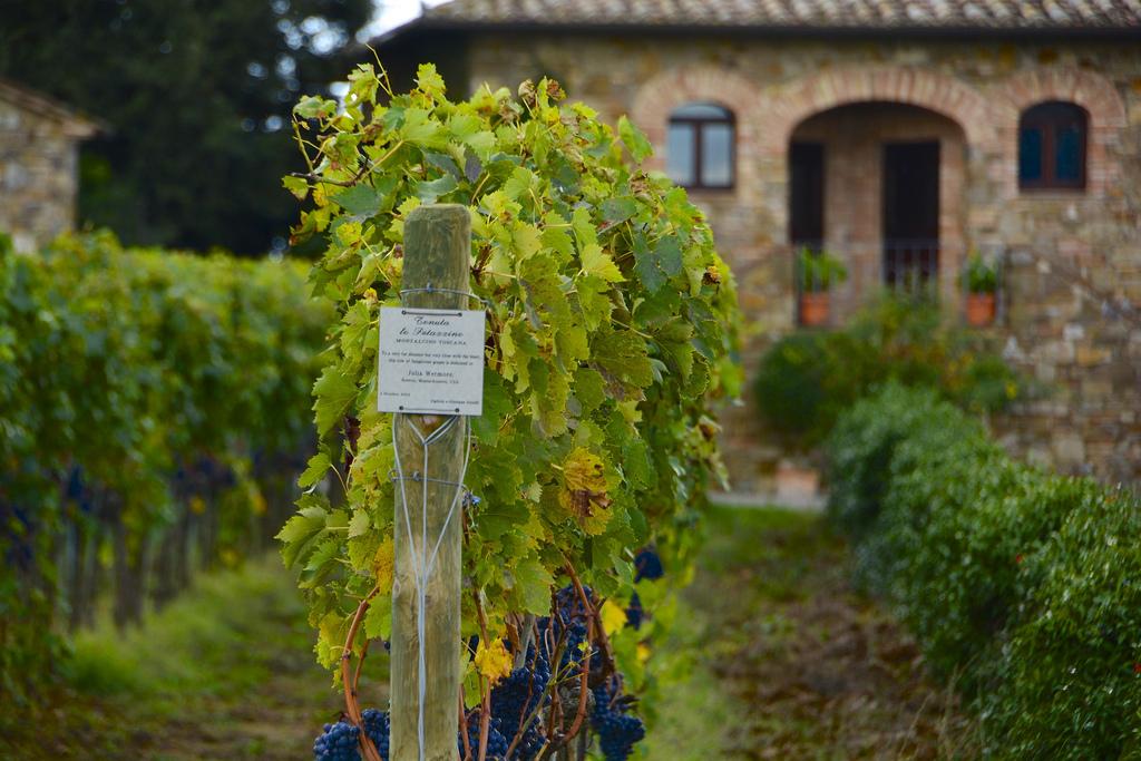 Brunello Vineyards - Tuscany in Autumn