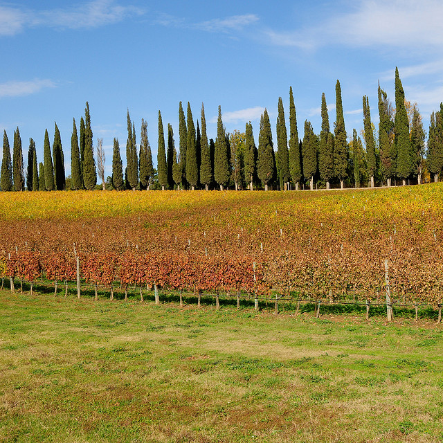 Fall_Tuscany_Countryside