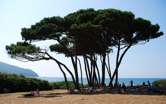 Baratti's pines - Photo credits: Davide Cicognani on Flickr