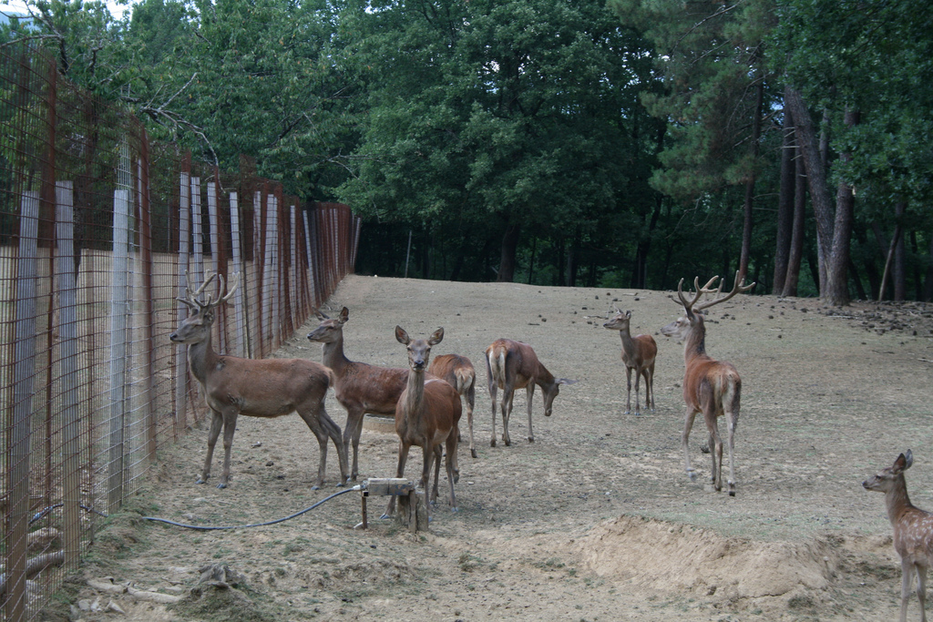 The Zoological Park of European Fauna in Poppi