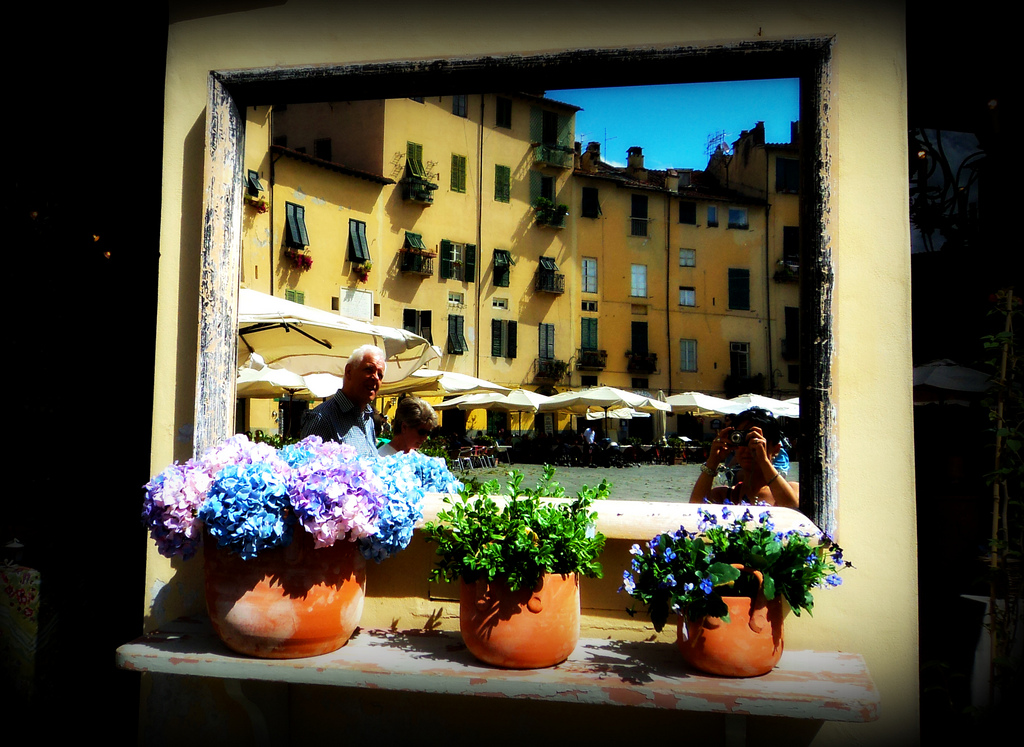 Lucca and flowers