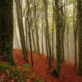 foreste-casentinesi-fall-foliage