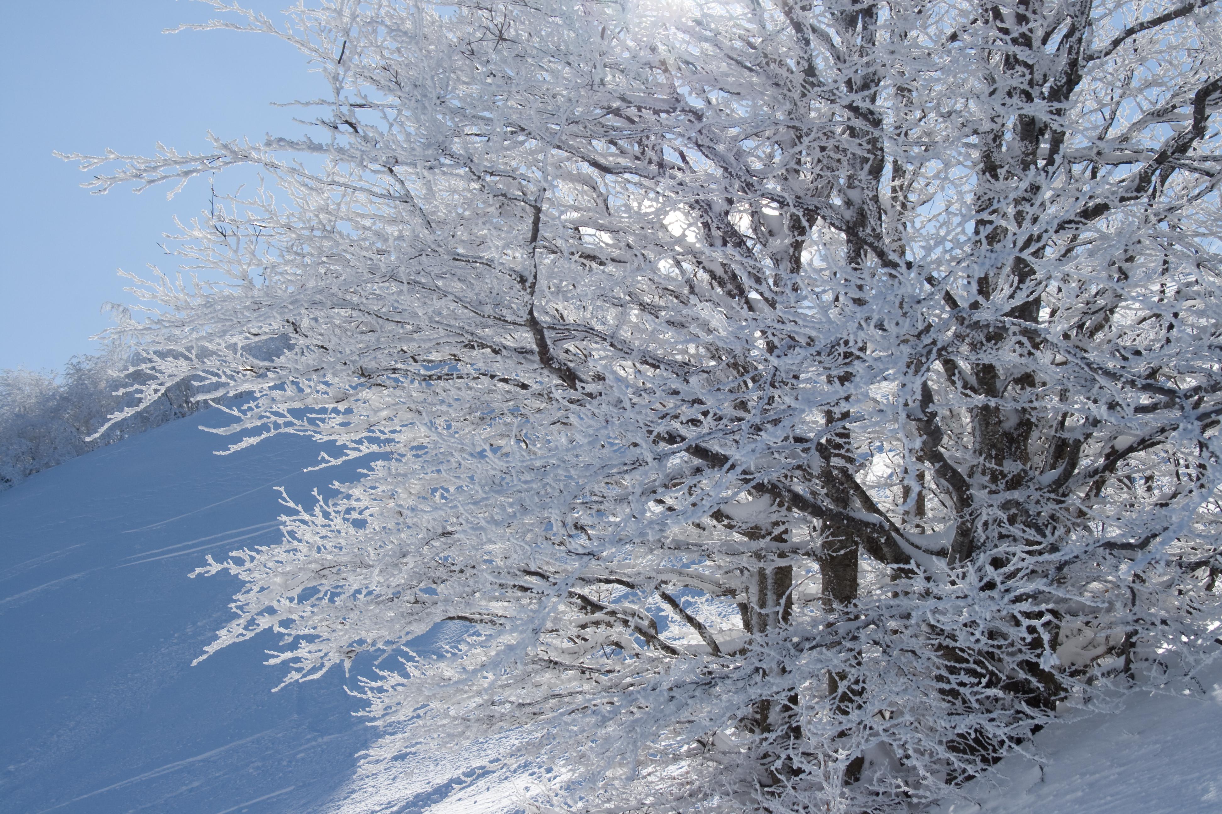 L 39 inverno for Immagini inverno sfondi