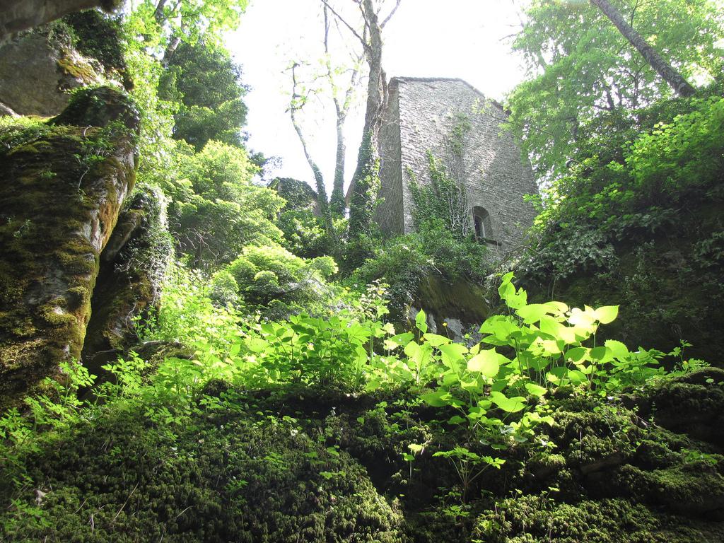 Verde, bosco, vegetazione