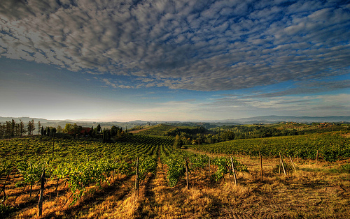 Vendemmia_by_FrancescoSgroi