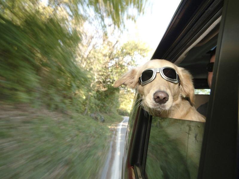 In viaggio con amici a 4 zampe [Photo Credits: www.petsit.com]