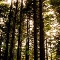Il bosco della montagna pistoiese