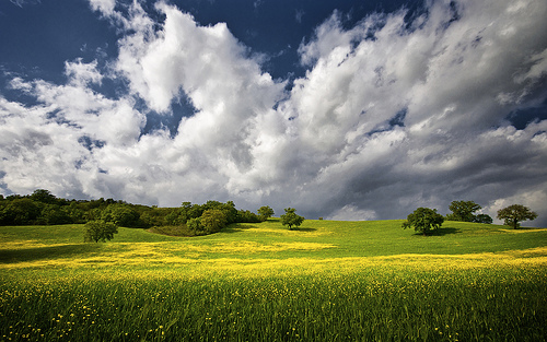 Maremma in the Spring is SO green, with lots of wildflowers and dramatic skies. Photo: flickr user marzinians