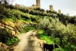 dog tuscany