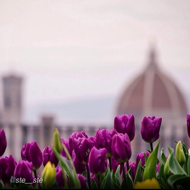 florence spring