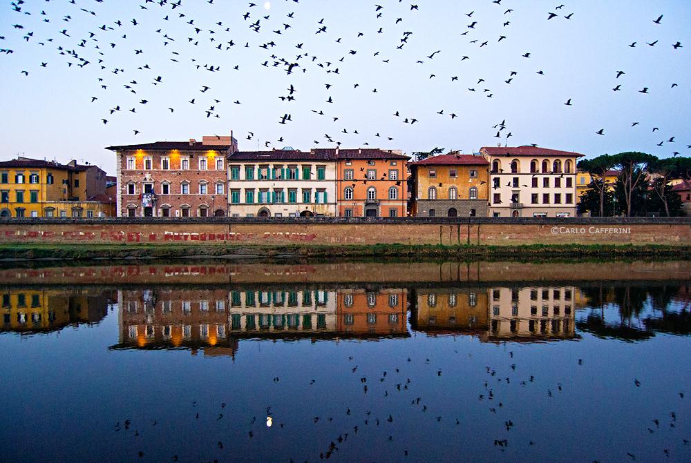 Cormorants at dawn - Lungarno Galilei, Pisa