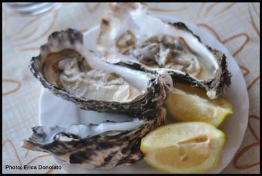 Oysters Livorno Tuscany