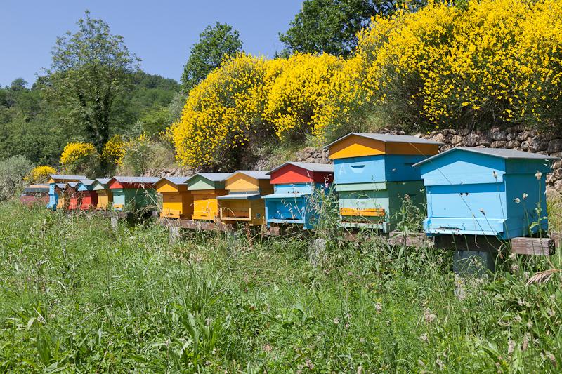 Pic credits: Consorzio di Tutela Miele della Lunigiana DOP