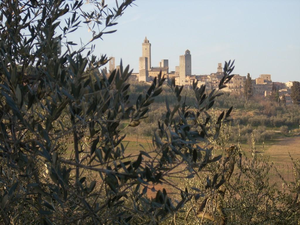 Pic credits: Consorzio dell'Olio extravergine di oliva Terre di Siena DOP