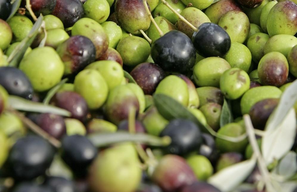 Pic credits: Consorzio Olio extravergine di oliva del Chianti Classico DOP