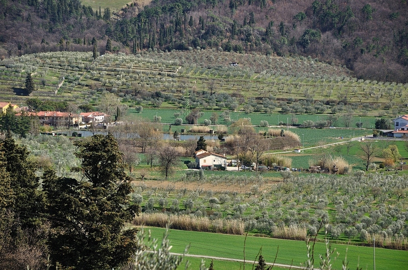Montemurlo countryside