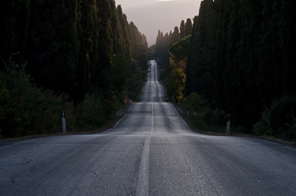 The cypress road to Bolgheri