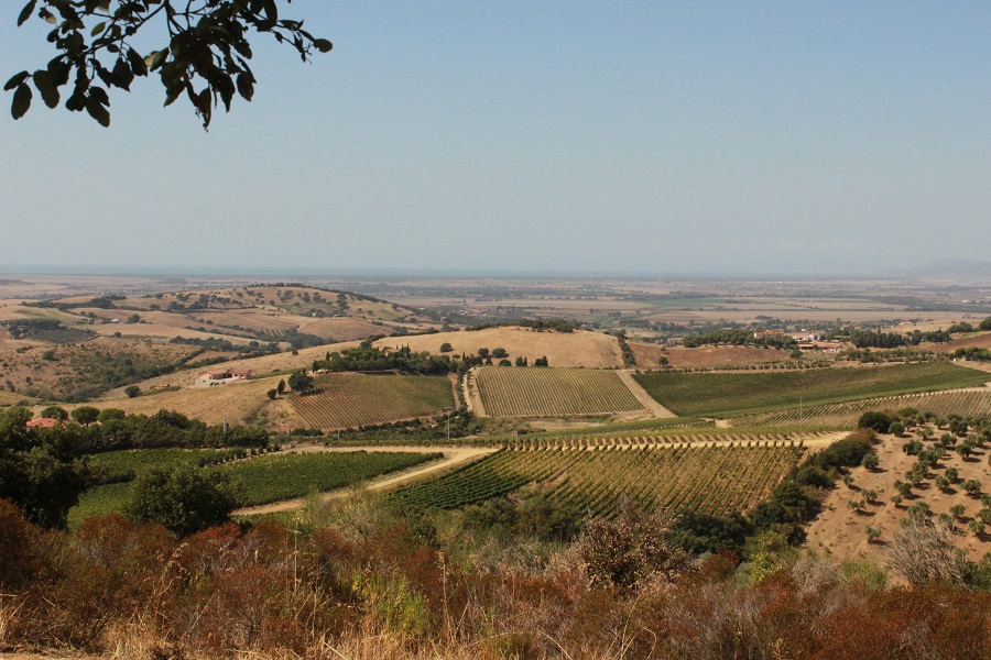 Vineyards in the Maremma