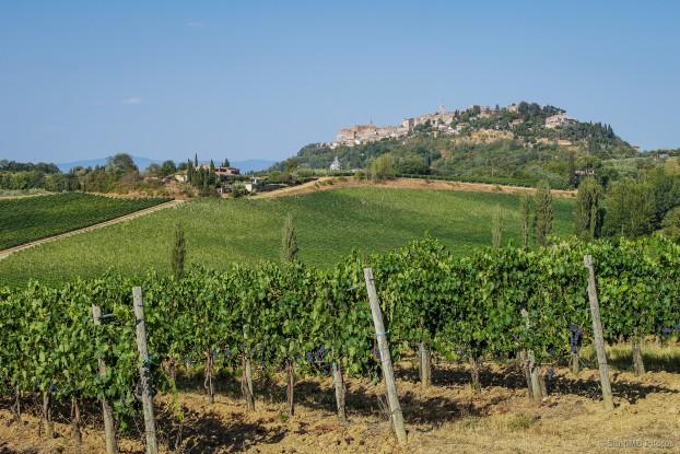 montepulciano-vineyards