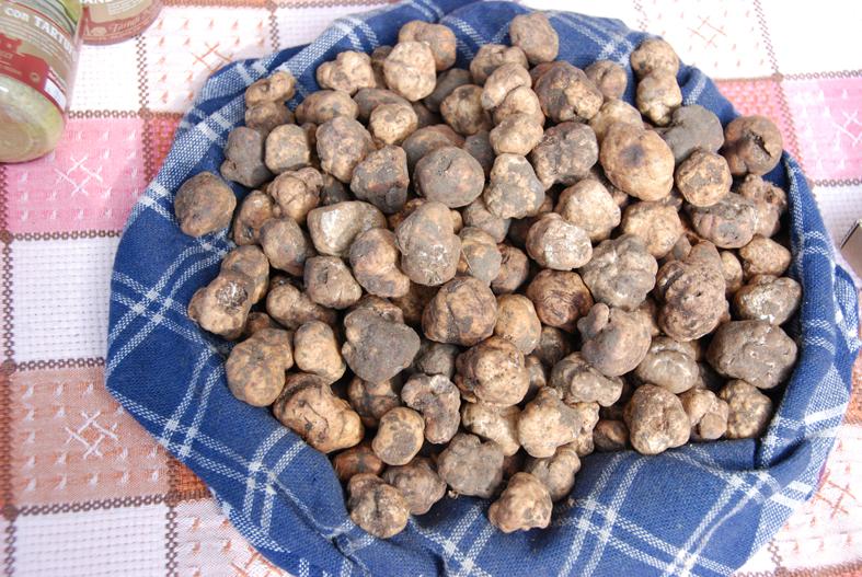 Truffles in Tuscany