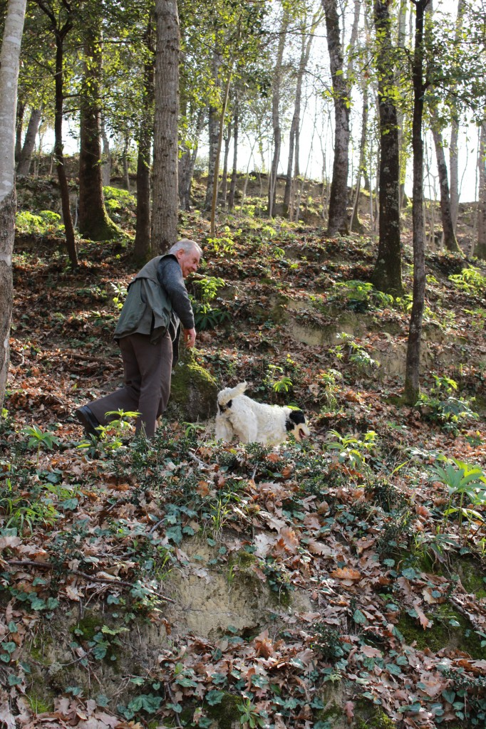 Hunting for truffles in San Miniato