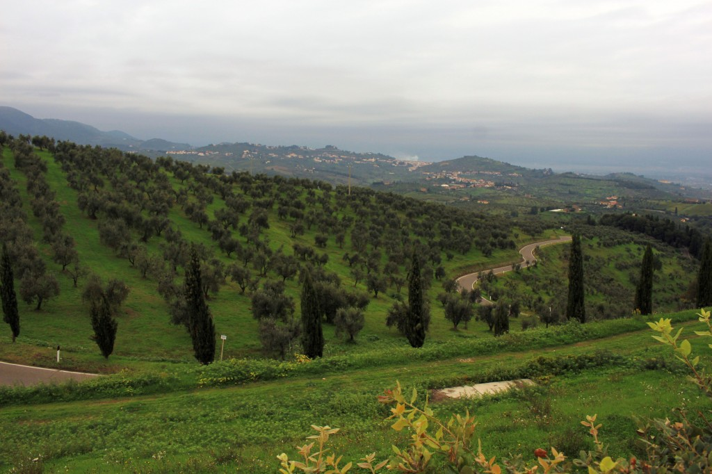 hills-artimino